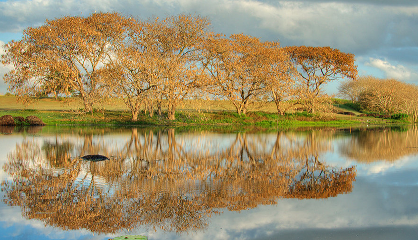 trees and reflection on a lake